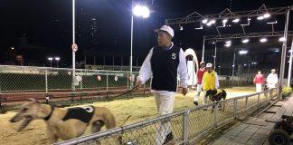 梁安琪指安置格力犬方案包括與內地及海外團體合作
