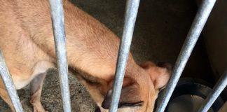 民署指路環安置格力犬中心設施須按動保法規定