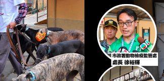 藉格力犬絕育斂財涉濫用職權等罪成 市政署前處長徐裕輝囚4年
