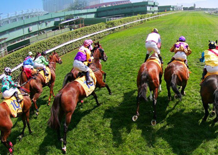 澳門廿匹退役馬運往珠海 重新訓練參與大灣區體育事業